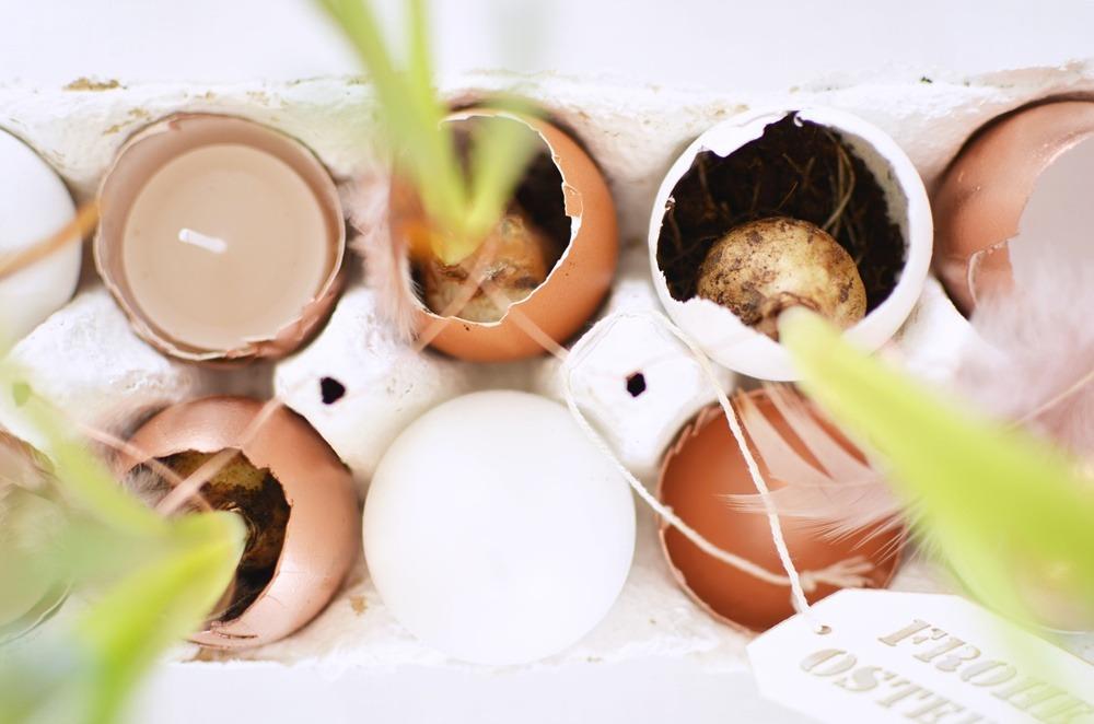 Frühstückstisch-Ostern-Brunch-puppenzirkus-Eierschalen-bepflanzt-muscari-kupfer-eier-eggs-diy