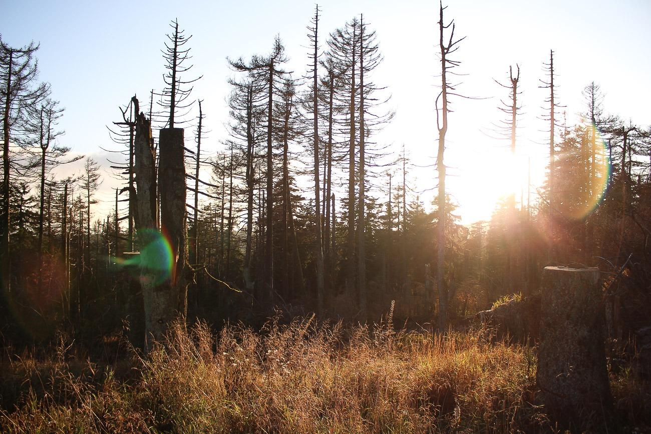Ein herbstlicher Sonnenuntergang im Herbst