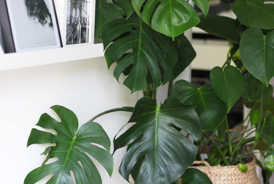 Diese 5 Zimmerpflanzen verwandeln deine Wohnung in eine grüne Oase