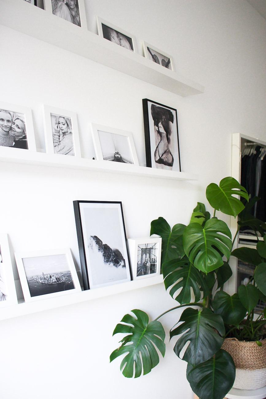 diese 5 zimmerpflanzen verwandeln deine wohnung in eine gr ne oase. Black Bedroom Furniture Sets. Home Design Ideas