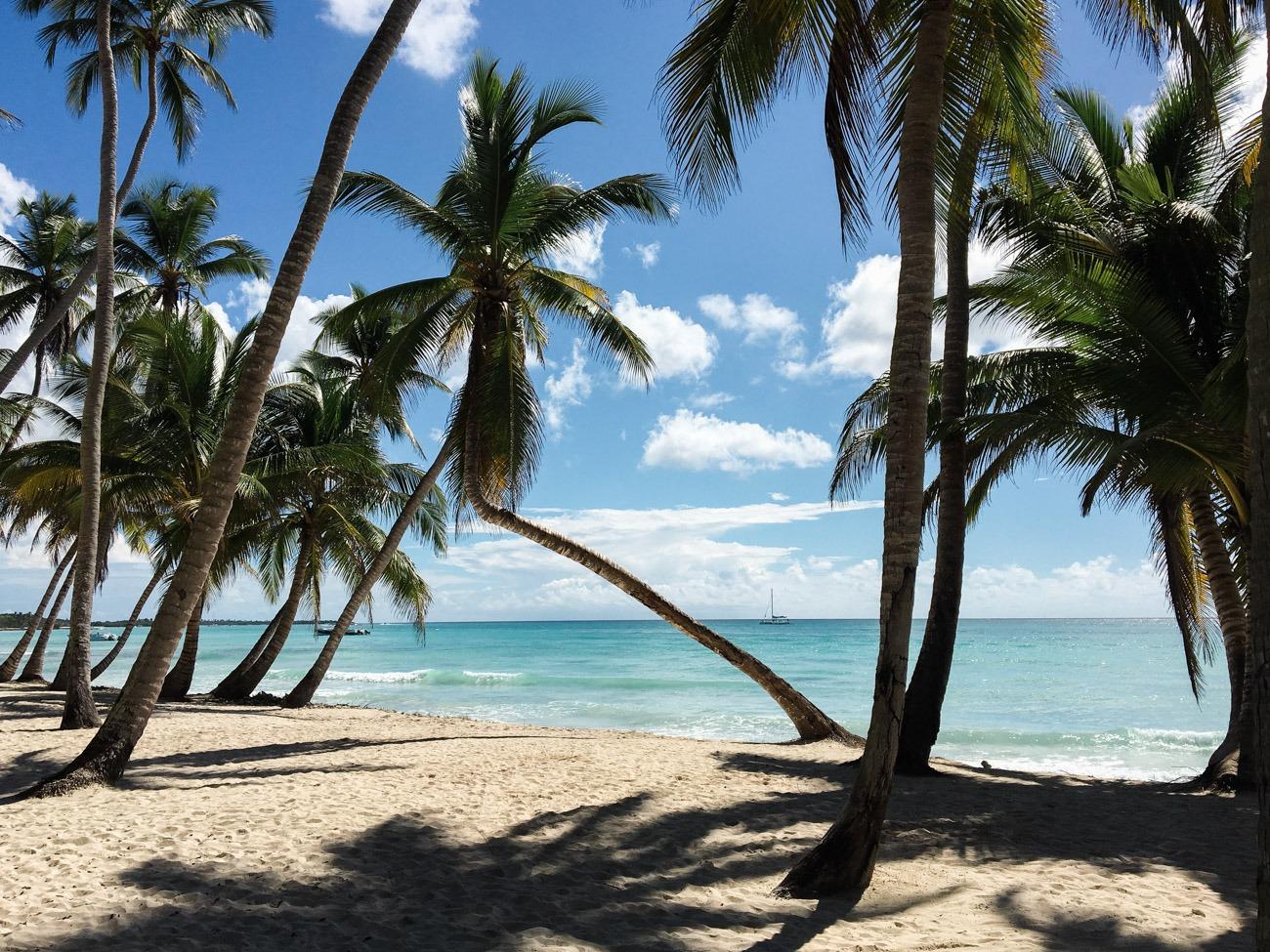 Hohe Palmen, türkisblaues Karibikmeer und feiner Sand am Strand von Saona