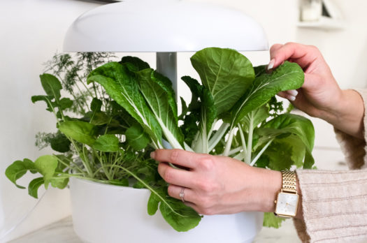 Grüner Trend 2019: Smart Indoor Gardening