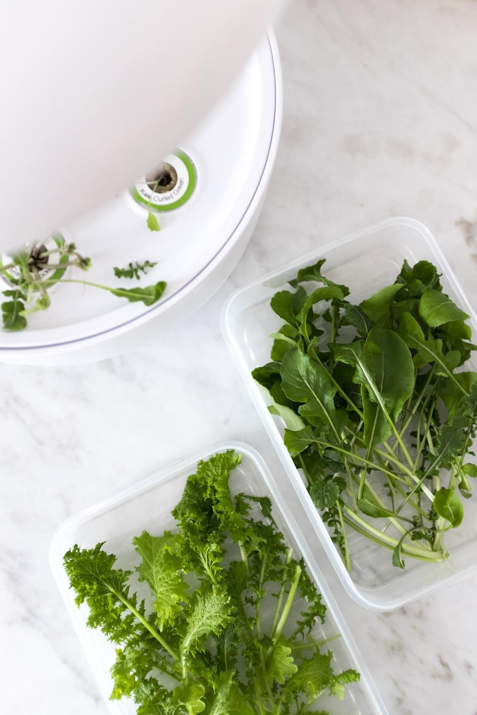 Bei der Ernte vom SmartGrow: die frisch geernteten Kräuter und Salate kann man auch super für ein paar Tage im Kühlschrank aufbewahren. Ich verwende dafür luftdicht verschlossene Dosen und schon bleiben sie super knackig!