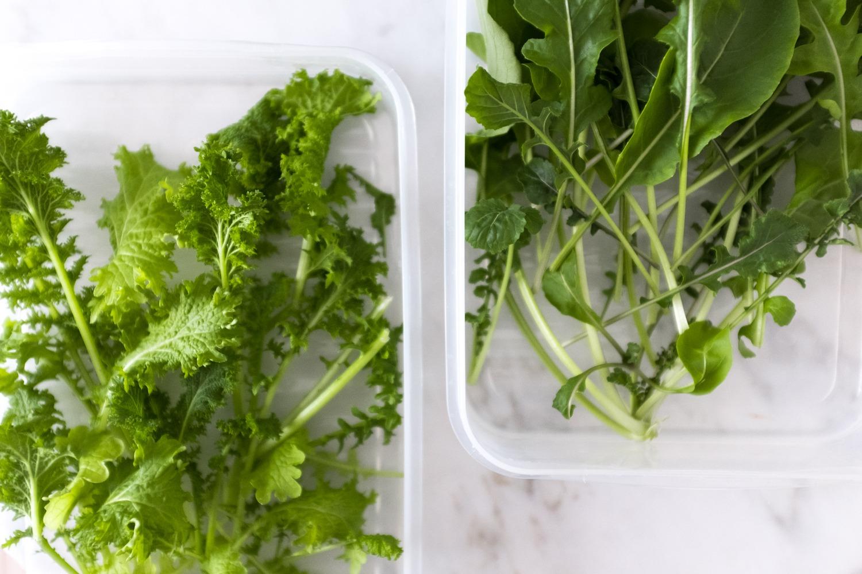 Eigene Ernte der Daily Greens: Links: Brauner Senf und Rechts: Rucola