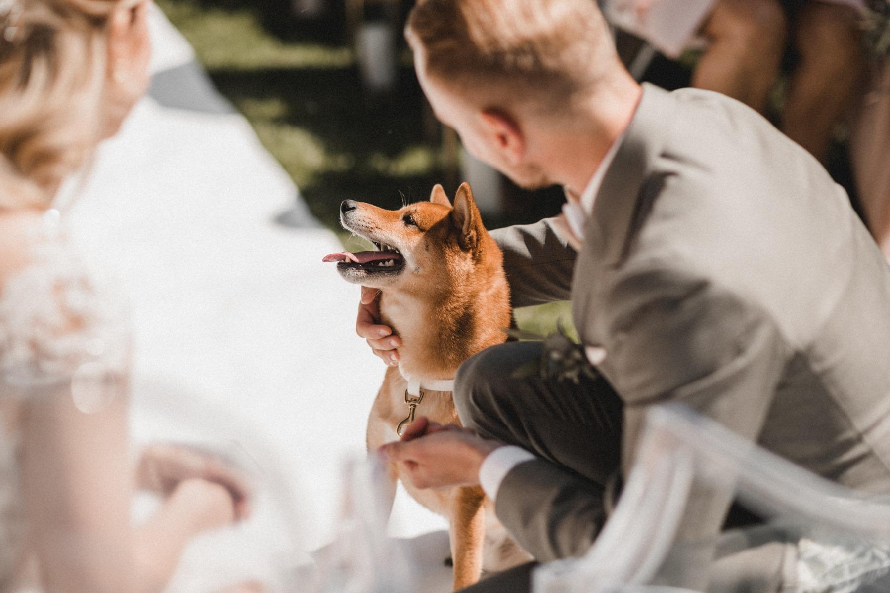 Der Hund als Ringbringer: Taro mit den Eheringen